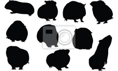 Cochon Dinde Silhouette Illustration Vectorielle Peintures Murales Tableaux Cavy Blaireau Embleme Myloview Fr