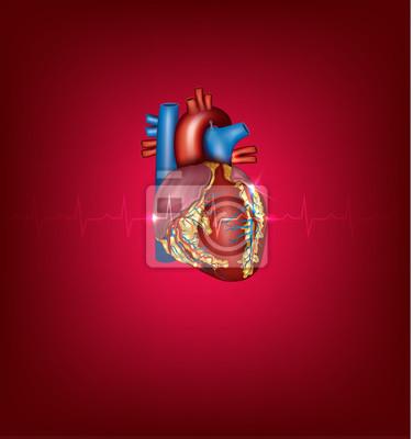 Image Coeur Illustration Médicale Humain Sur Un Fond Rouge Vif