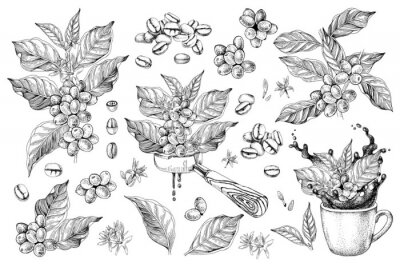 Image Coffee designs set with branches, beans, portafilter and cup with splash