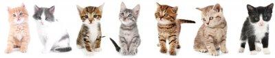 Image Collage de chatons mignons sur fond blanc