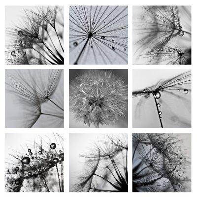 Image Collage ze zdjęć makro Wielkiego dmuchawca