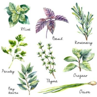 Image Collection d'aquarelle d'herbes fraîches isolé.