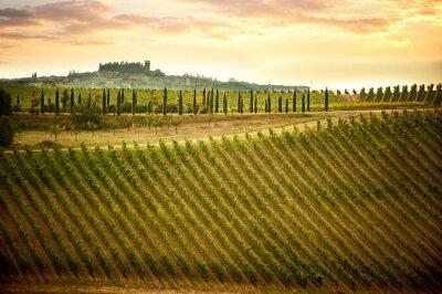 Image Collines du Chianti avec des vignes et des cyprès. Paysage toscan entre Sienne et Florence. Italie