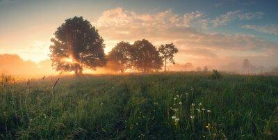 Image Coloré, ressort, lever soleil, pré