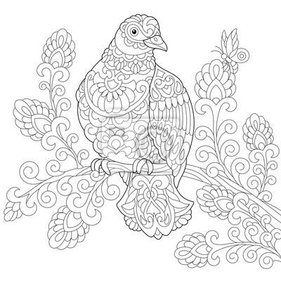 Coloriage Le Chien Et Le Pigeon.Coloriage De Loiseau De Colombe Pigeon Dessin Dequisse A