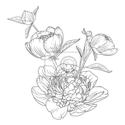 Image Composition De Bouquet De Fleurs De Pivoine Rose Dessin Esquisse