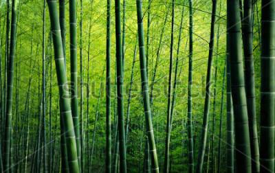Image Concept de nature des arbres de forêt de bambou
