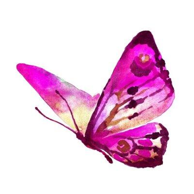 Image conception de papillons