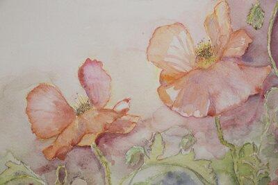 Image Coquelicots roses et oranges.