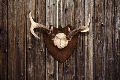 Image Cornes sur un mur en bois