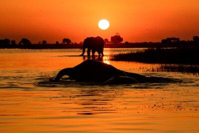 Image coucher de soleil d'éléphant