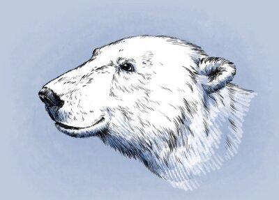 Image Couleur graver isolé vecteur ours