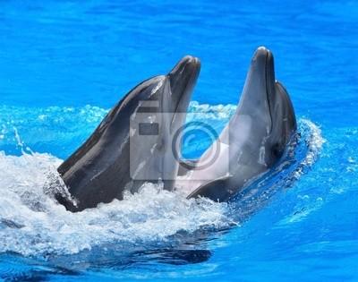 Couple de dauphin dans l'eau bleue.