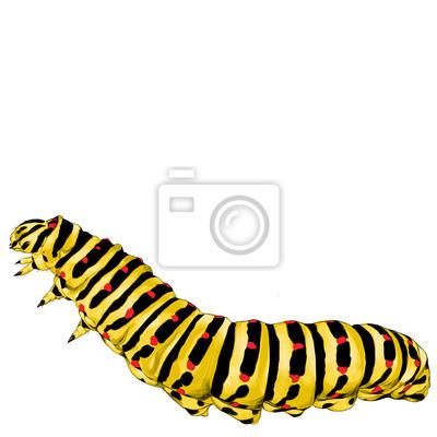 Cracking A La Chenille Jaune Dessin Vectoriel Croquis Image Peintures Murales Tableaux Larve Ramper Caterpillar Myloview Fr