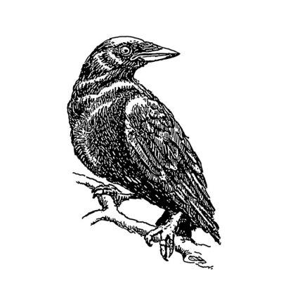 Croquis Tatouage croquis, tatouage, corbeau, séance, branche peintures murales