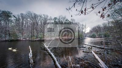 Image Cygnes nageant sur une rivière en hiver