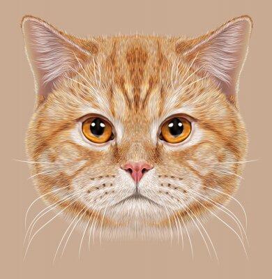 Image D'Illustrations - portrait, britannique, court, cheveux, cat. Mignon orange Chat domestique avec des yeux en cuivre.