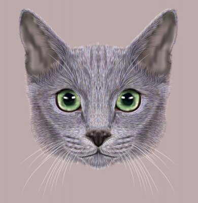 Image D'Illustrations - portrait, russe, bleu, chat. Mignon chat domestique aux yeux verts.