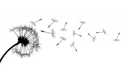 Image Dandelion silhouette
