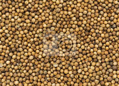 de nombreuses petites graines de coriandre séchée. Alimentation spicery milieux