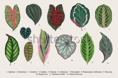 Image Définir les feuilles. Exotiques. Illustration botanique vector vintage Coloré.
