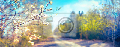 Image Defocused spring landscape. Beautiful nature with flowering willow branches and forest road against blue sky with clouds, soft focus. Ultra wide format.