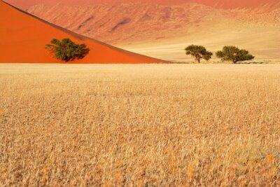 Desert herbes, des dunes de sable et des arbres, Sossusvlei, en Namibie