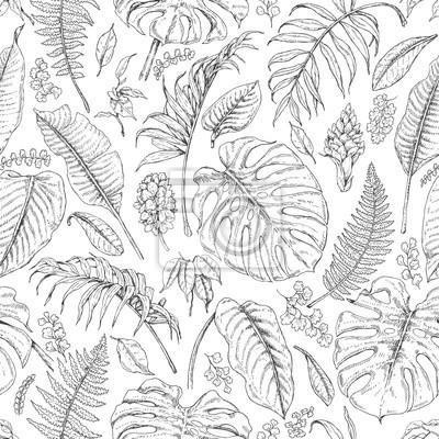Image Dessin à La Main Des Plantes Tropicales