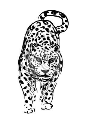Dessin A La Main Jaguar Vector Illustration Peintures Murales Tableaux Rodant Puissant En Voie De Disparition Myloview Fr
