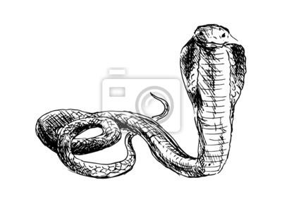 Dessin Cobra dessin à la main un cobra. vector illustration peintures murales