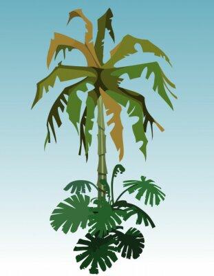 Image Dessin Animé Cocotier Paume Tropical Plante