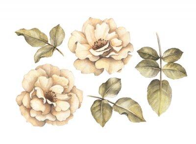 Image Dessin au crayon de roses