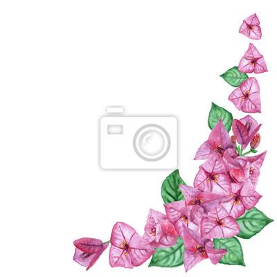 Image Dessin Daquarelle De Fleurs De Printemps Bougainvilliers Main