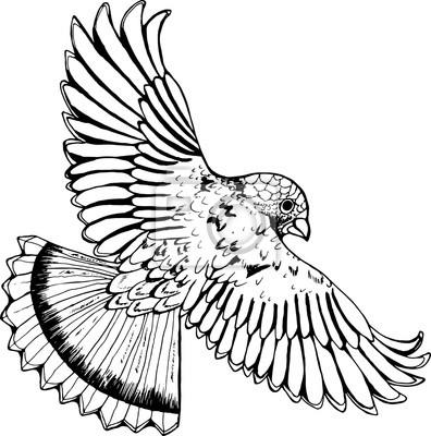 Dessin noir et blanc dun aigle oiseau en vol peintures murales tableaux ailier embl me - Dessin d aigle royal ...