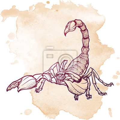 Dessin Realiste Realiste De Scorpion Sur Fond Grunge Ornement
