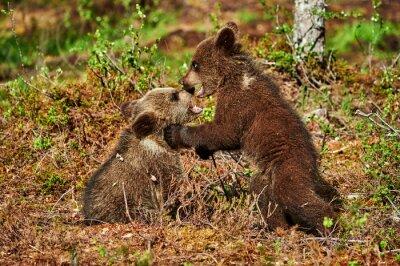 Image Deux, brun, ours, petits