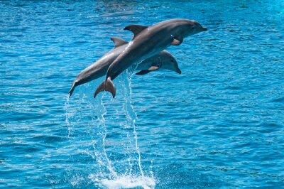 Image Deux dauphins sautent hors de l'eau bleue