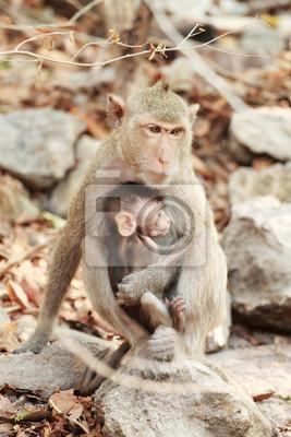 deux singes assis sur la pierre verticale