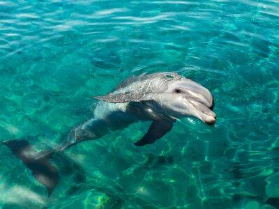 Image Dolphin sourit comme Mona Lisa