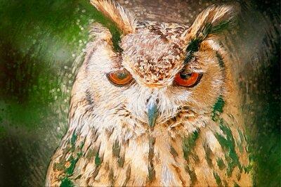Image Drawn Owl Portrait