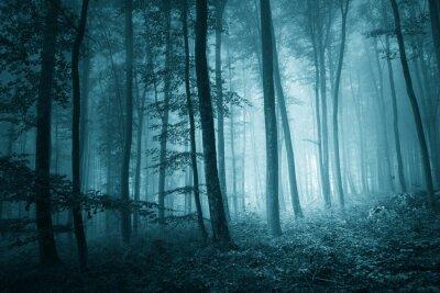 Image Dreamy mystique couleur bleue forêt brumeuse