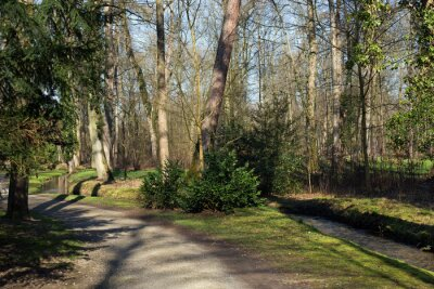 Image Ein Weg und ein kleiner Ajouter à la planchette de comparaison Bach im Wald