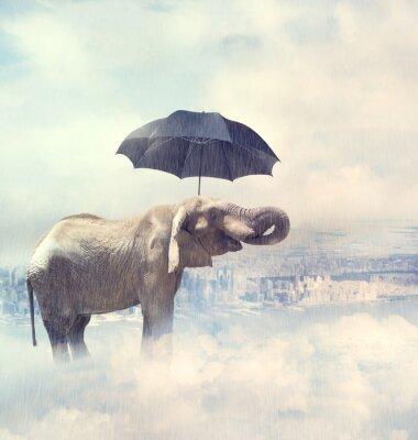 Image Elephant appréciant la pluie avobe la ville sur les nuages