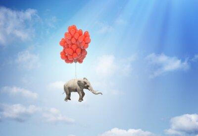 Image Elephant avec des ballons