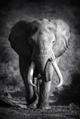 Image Elephant Bull (traitement artistique)