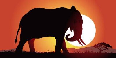 Image Elephant-couche de soleil