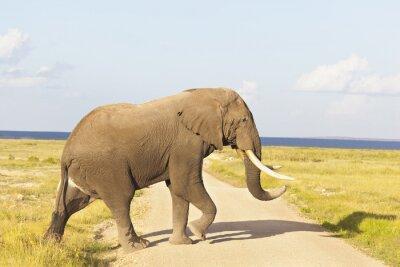 Image Éléphant d'Afrique au Kenya