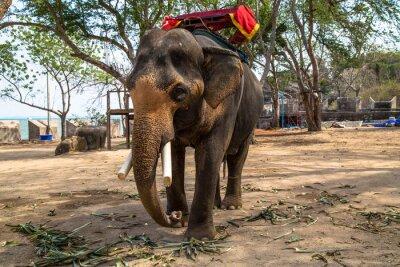 Image Éléphant d'Asie