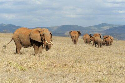 Image Éléphant dans le parc national du Kenya