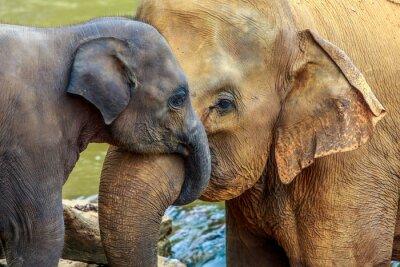 Image éléphant et bébé éléphant